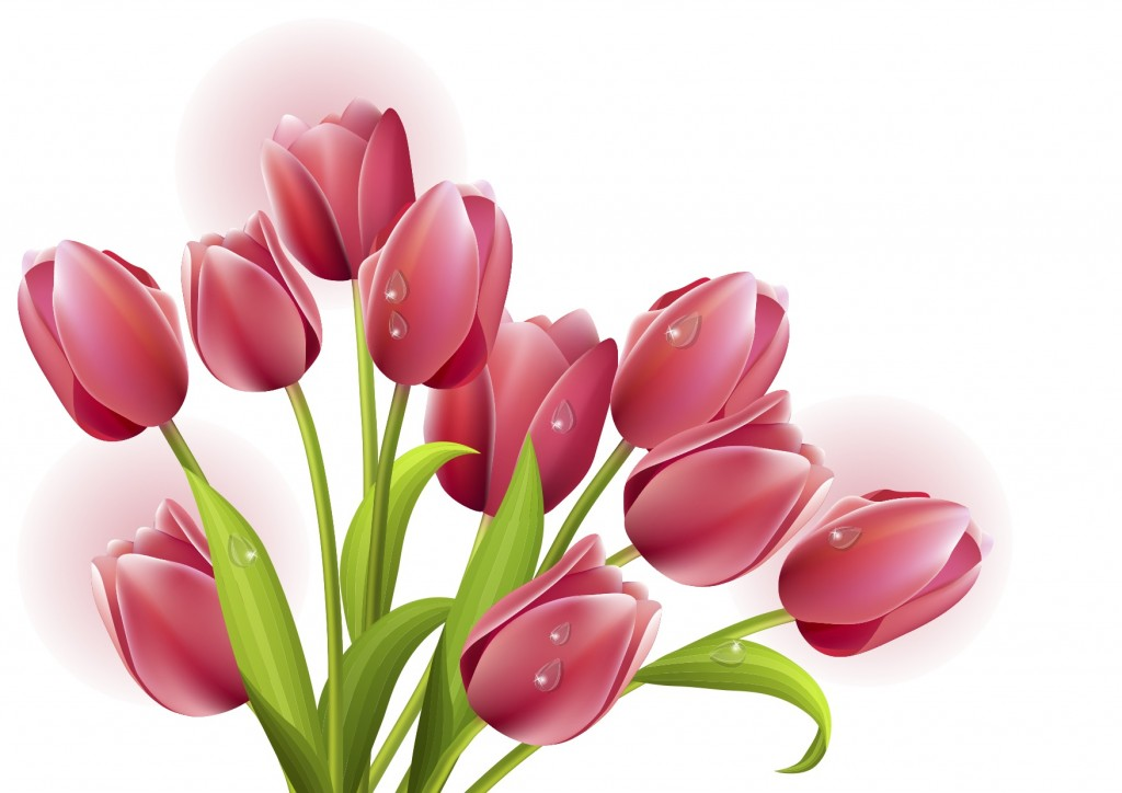 tulips-vector